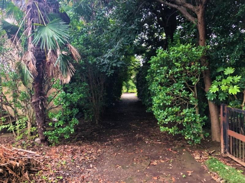 林の抜け道