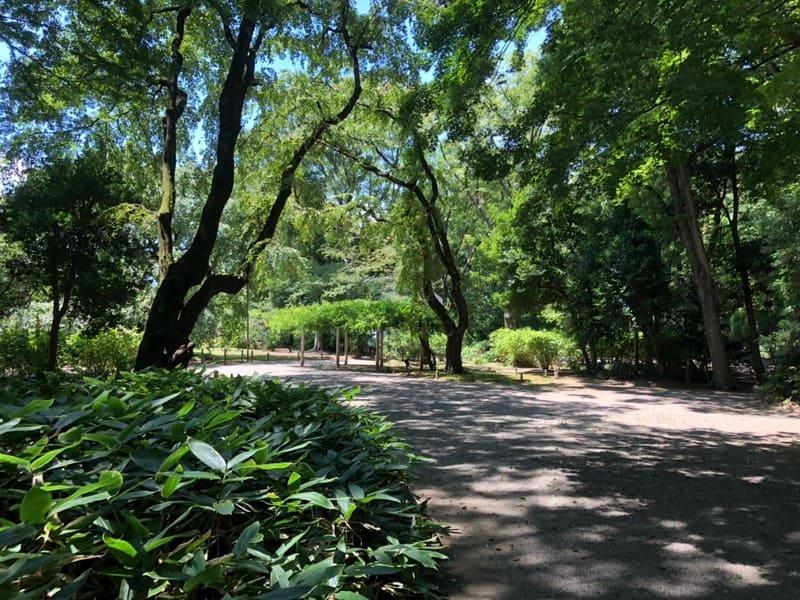 六義園 森林