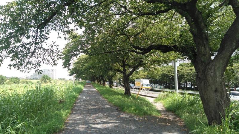 柳瀬川沿い 西側歩道