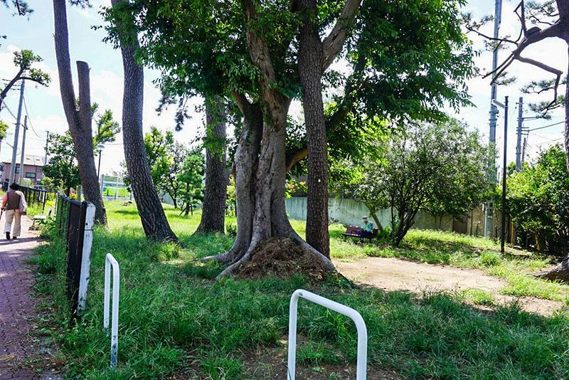 小学校前の空き地