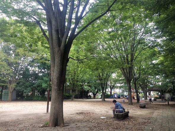 西口中央公園の園内風景
