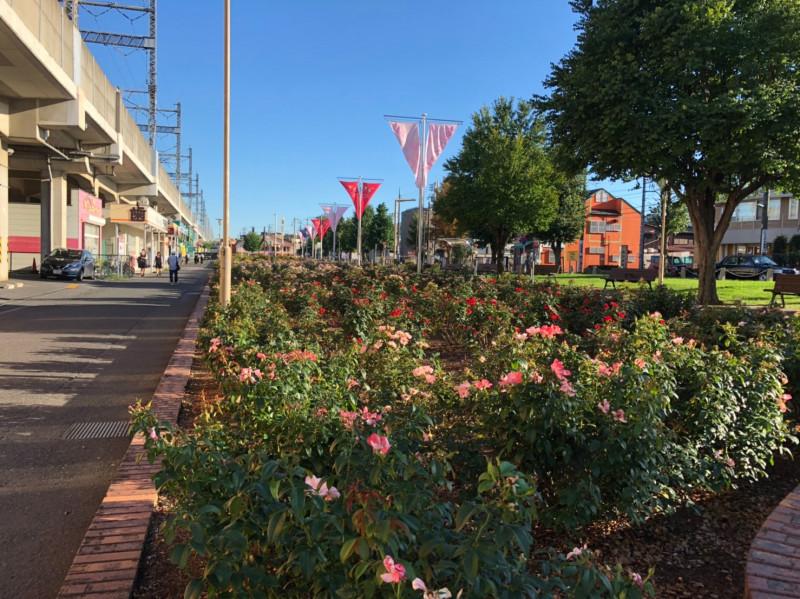 与野本町駅前のバラ花壇