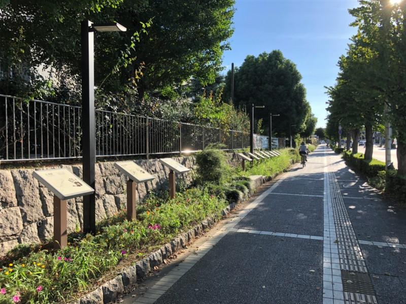 タツミ通りの歩道