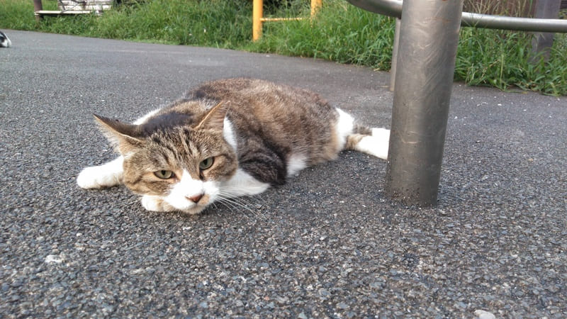 北町ふれあい公園の猫 アップ