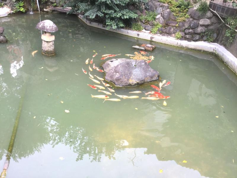 粟島神社の池