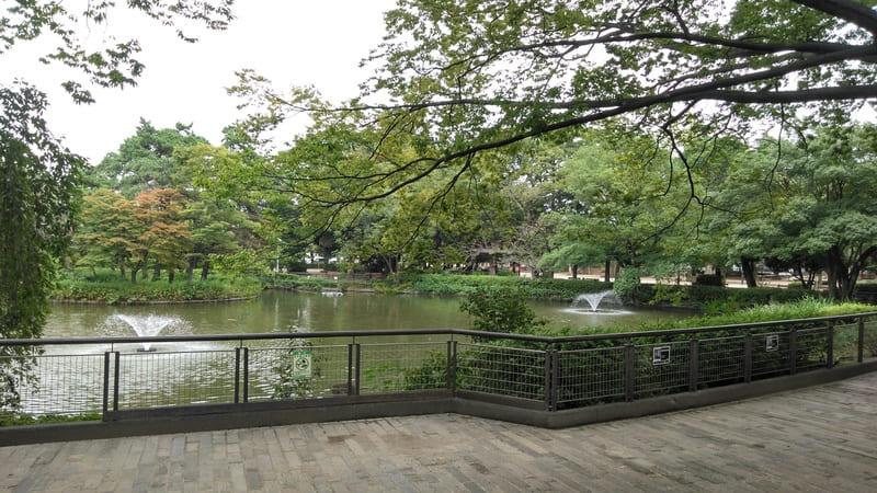 妙正寺公園内の池