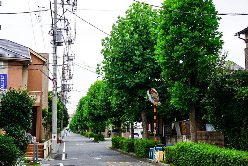 街路樹が多い通り