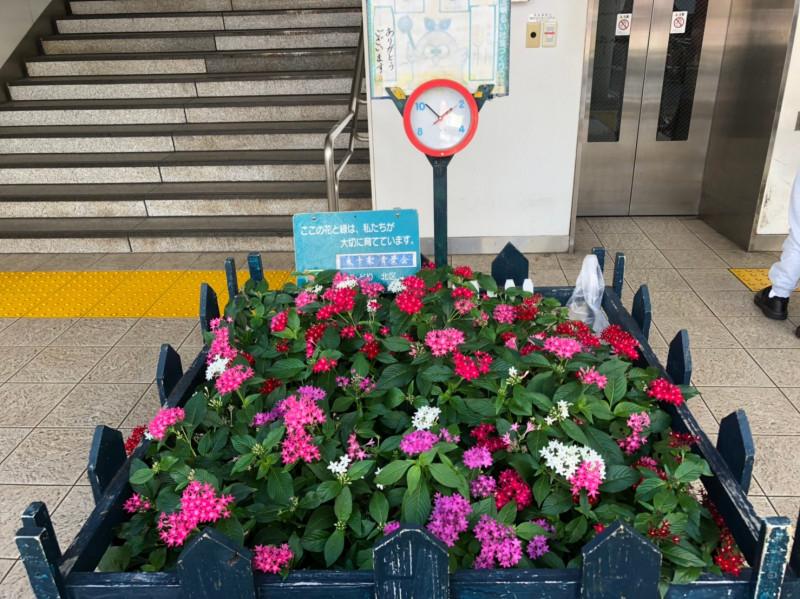 東十条駅前の花