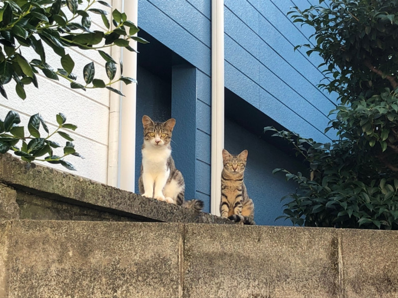 中十条4丁目の野良猫