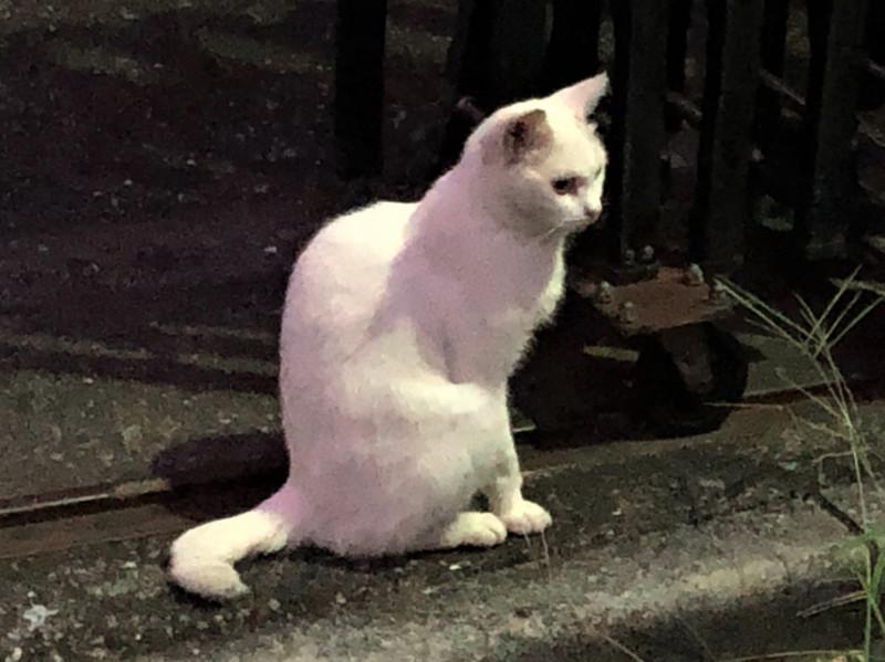 中浦和駅周辺の野良猫