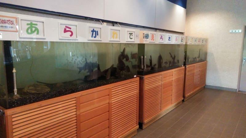 荒川知水資料館 荒川の魚