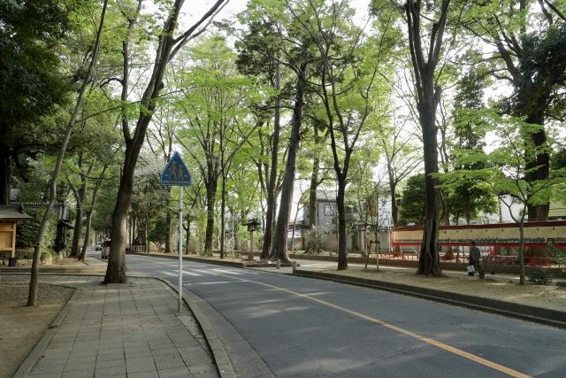 氷川神社の緑道