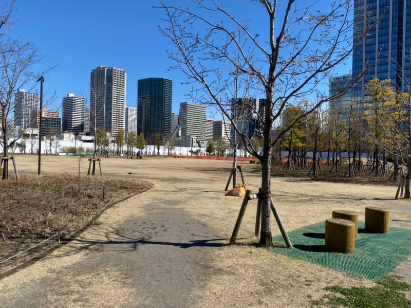芝浦中央公園から見える品川のタワーマンション