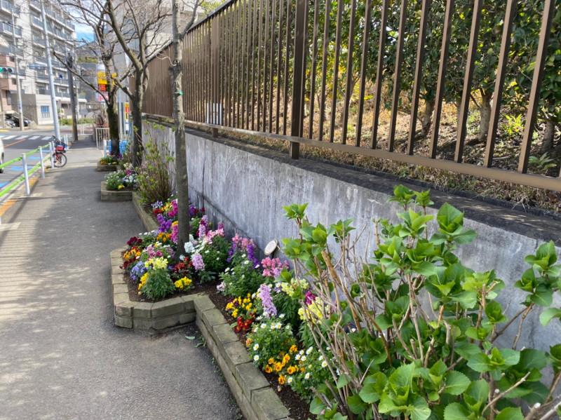 桂坂沿いの花壇