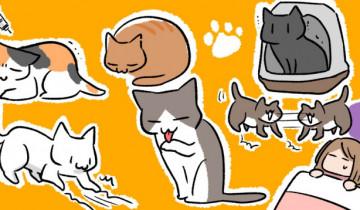 一人暮らしで猫を飼う前に知っておくべきことのイメージイラスト