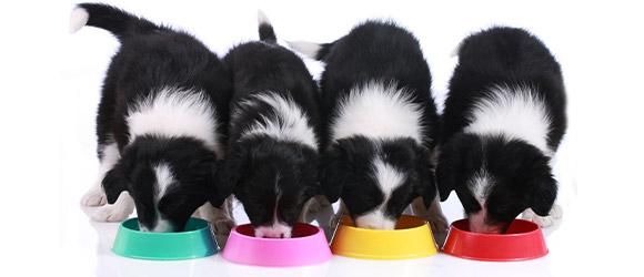 4匹の犬がドッグフードを食べている様子